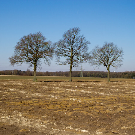 Three Bare Trees